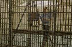 Rights and Privileges Inmates Have